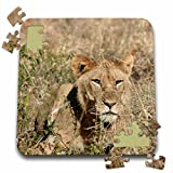 Angelique Cajam Big Cat Safari - Young lion in the grass - 10x10 Inch Puzzle (pzl_26826_2)