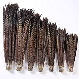 Maslin Asia Ra 50pcs/lot Natural Color Dyed Pheasant Tails Feather 50-55cm Long Ringneck Lady Amherst Pheasant Plumes for Crafts - (Color: 65-70cm 50pc) (Color: 65-70cm 50pc)