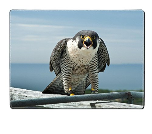 luxlady-placemat-marine-parkway-bridge-falcons-natural-rubber-material-image-27341429726