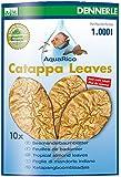 Dennerle Traitement de l'Eau pour Aquariophilie Aqua Rico Catappa Leaves