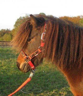Nylon Halfter mit Pferdemuster Gr. Shetty Farbe:
