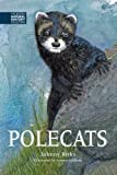 Polecats (The British Natural History Collection)