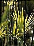 1art1 50598 Pflanzen - Exotische Bl�t...
