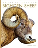 Bighorn Sheep (Amazing Animals)