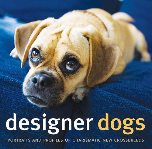 Designer dogs portraits and profiles of popular new crossbreeds dog