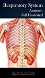 The respiratory system.Anatomy, Full IllustratedInclude: Paranasal sinusesUpper respiratory airwaysSubdivisions of respiratory airwaysNormal bronchusSubdivisions and structures of intrapulmonary airwaysInternal structures of the alveoliAlveolar ultra...