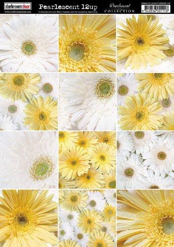 darkroom-porta-gerbere-carta-perlescente-a4-10-unita-giallo-bianco