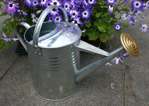 Traditional Watering Can Galvanised and Brass 2 Gallon