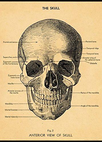 Paper Skeletal System