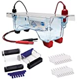 Edvotek M12 Dual Electrophoresis Apparatus, 2 Lab Groups Sample, 7cm Length x 7cm Width Gel Trays