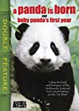 A Panda Is Born/Baby Panda's First Year
