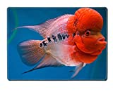 MSD Placemat Kitchen Table 15.8 x 12 x 0.2 inches IMAGE ID: 37629994 Fish with big head