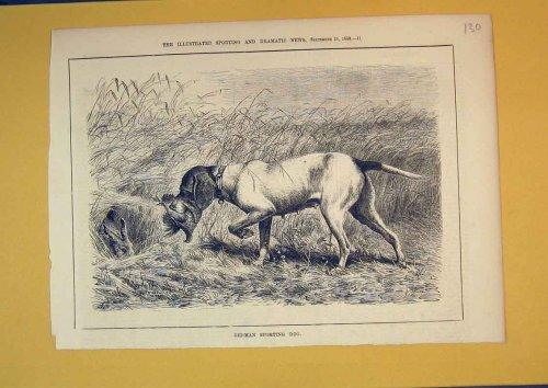 1880 German Sporting Dog Bird Hare Country Animals
