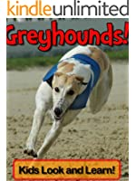 Greyhounds! Learn About Greyhounds and Enjoy Colorful Pictures - Look and Learn! (50+ Photos of Greyhounds)