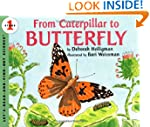 From Caterpillar to Butterfly  (Let's...