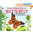 From Caterpillar to Butterfly (Lets-Read-and-Find-Out Science Stage 1)