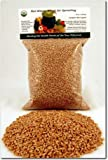 Organic Hard Red Wheat Seed- 1 Lbs (16 Oz.)- Grow Wheatgrass, Flour, Grain & Bread, Emergency Food Storage, Ornamental Wheat Grass, More- Excellent Germination