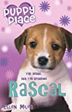 RASCAL (PUPPY PLACE)