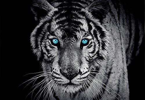 olimpia-design-fototapete-photomural-tiger-1-stuck-153p4