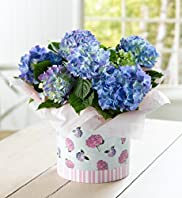 Hydrangea Hat Box