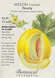 how to eat canary melon