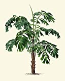 Palm-Tree-Print-Set-of-6-Antique-Art-Beautiful-Green-Plants-Tropical-Garden-Nature-Home-Room-Wall-Decor-Unframed-LPH
