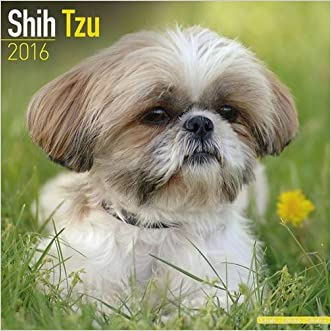 Shih Tzu Calendar - Only Dog Breed Shih Tzu Calendar - 2016 Wall calendars - Dog Calendars - Monthly Wall Calendar by Avonside