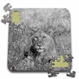 Angelique Cajam Big Cat Safari - Young lion head in the grass - 10x10 Inch Puzzle (pzl_26820_2)