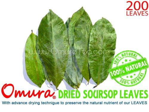 Omura Soursop Leaves (Dried) 100% Natural Graviola (200 Leaves)