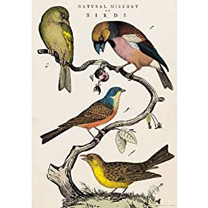 Cavallini Decorative Paper- Natural History Bird Print 20x28 Inch Sheet