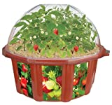 DuneCraft Doomsday Vegetables All-Star Collection Terrarium by DuneCraft