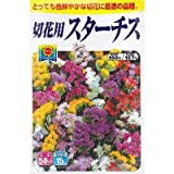 美色混合 スターチス (春、秋まき) (834)
