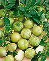 Tomatillo Seed