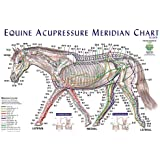 Equine Acupressure Meridian Composite Chart Horse (Lake Forest Anatomicals Vet Models)|Lake Forest Anatomicals Vet Models