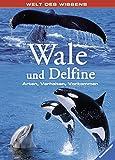 Wale und Delfine: Arten