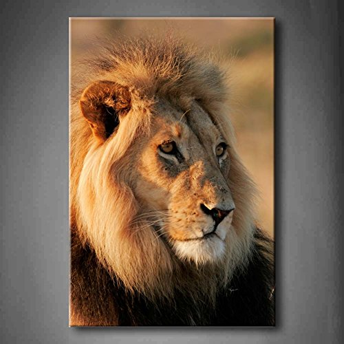 Big Male African Lion Sit At Mud Wall Art Painting Pictures Print On Canvas Animal The Picture For Home Modern Decoration (Stretched By Wooden Frame,Ready To Hang)