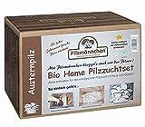 Austernpilz Bio Home-Pilzzuchtset im Pilzzuchtkarton
