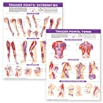 Trigger Point Chart Set: Torso and Ex...