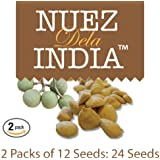 Nuez de La India 2 Packs (24 seeds)