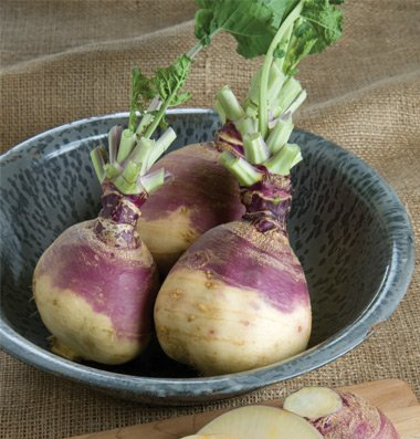 Rutabaga American Purple Top D634A 100 Seeds By David'S Garden Seeds