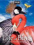 Life of Birds (Full Screen) [3 Discs]