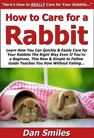 how to care for a rabbit learn how you can quickly