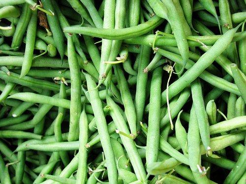 organic-blue-lake-bush-bean-75-seeds-0603-item-upc650348691943