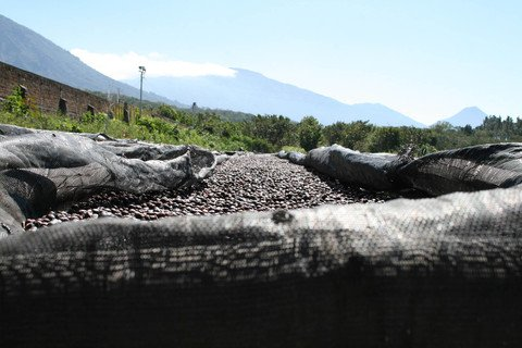 5lb-el-salvador-angel-mountain-unroasted-green-coffee-beans