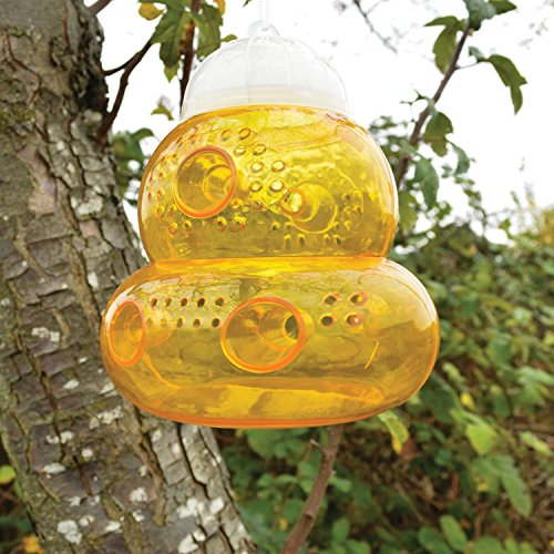 seicosy-tm-non-toxic-wasp-trap-sting-free-trap-bee-wasp-hornet-yellow-jacket-fruit-fly-and-more