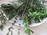 Grow Your Own Herb Collection: French Cooking ? Six Pots of Perennial Herbs