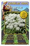 Everwilde Farms - Bishop's Flower Wildflower Seeds - Jumbo Seed Packet (2000)