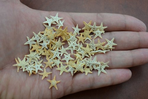 90 Pcs Small Starfish Star Sea Shell Beach Craft 1/2