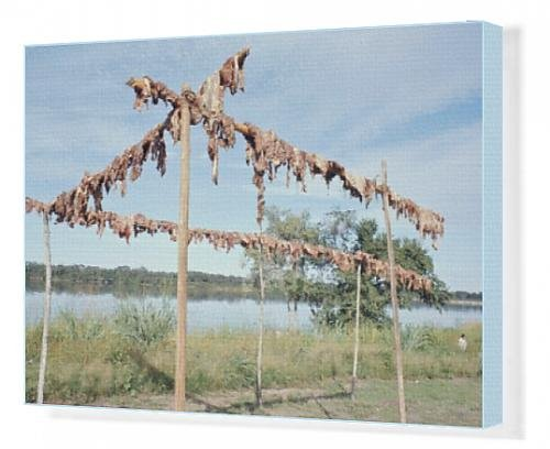 canvas-print-of-wild-boar-meat-hanging-to-dry-diararum-xingu-national-park-brazil-south