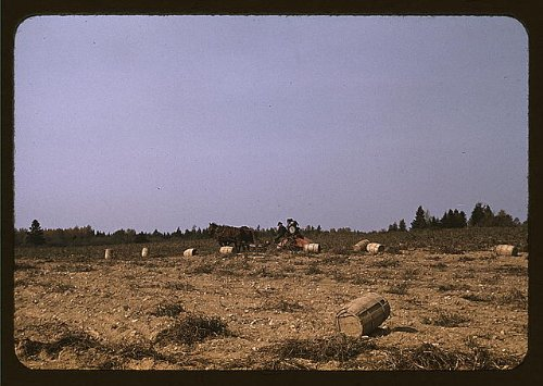 Photo A horse-drawn digger in operation on a potato farm run by a French-Canadian, Caribou, Aroostook county, Me.